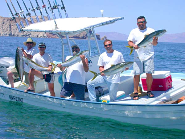 Yellowtail baja s winter bruisers for Capt cal fishing report
