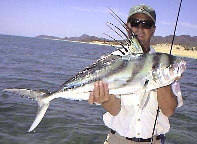 Roosterfish fish pictures and species identification for Rooster fish cabo
