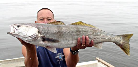 see bass fish photo