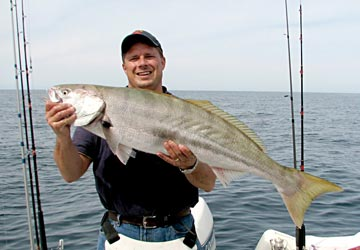 Mulege yellowtail go on winter chew mexico fishing news for Rocky point fishing charters