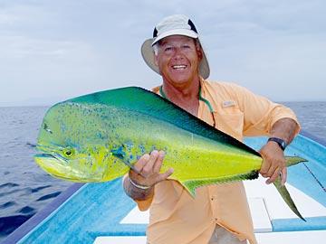 Loreto 39 s hot dorado season rocks on dorado migration at for Cancun fishing seasons