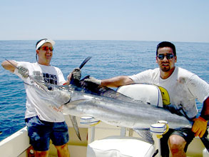 Los cabos yellowfin tuna go full limits roosters and for San carlos mexico fishing