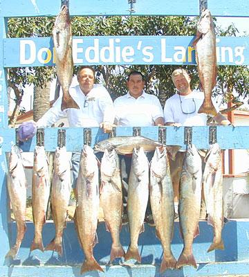 Good fish counts on post storm baja tuna and dorado for H m fish count
