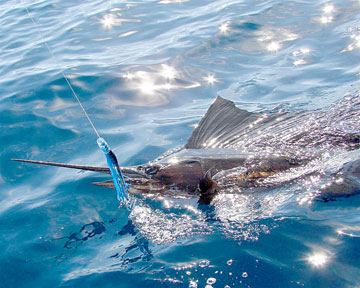 Windy fishing week for baja 39 s sea of cortez coast for Loreto mexico fishing