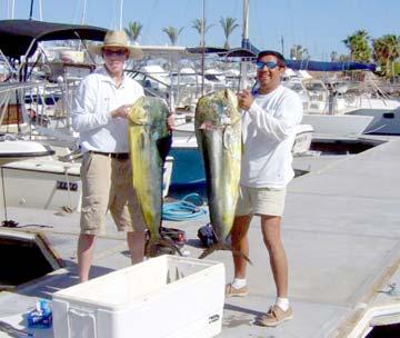 White seabass caught in san quintin fishing san carlos for San carlos mexico fishing