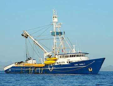 Tuna and dorado ripping for La Paz sportfishing pangas, Mazatlan ...