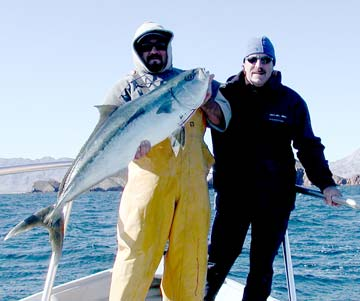 Windy weather yellowtail fishing action at bahia de los for Fishing in los angeles