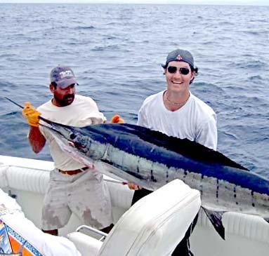 Historic marlin bite for cabo san lucas fishing boats for Cabo san lucas fishing season