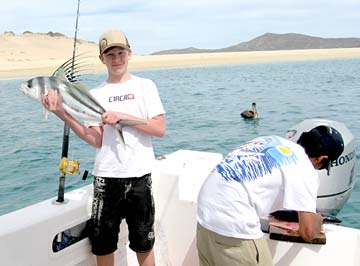 Steady midriff yellowtail fishing off bahia de los angeles for Rooster fish cabo