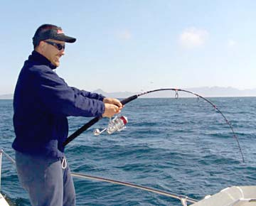 Loreto yellowtail springing into action rocky point for San carlos mexico fishing