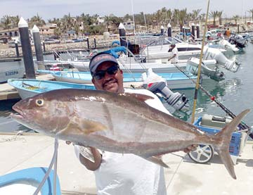 Roosterfish slashing bait on east cape beaches warming for Rooster fish cabo