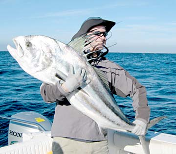 Dorado migration reaches loreto sportfishing waters hefty for Rooster fish cabo