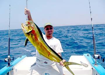 Dorado sportfishing limits for loreto pangas striped for San carlos mexico fishing
