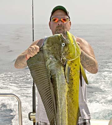 Loreto dorado step up for the summer fishing season for Cabo san lucas fishing season
