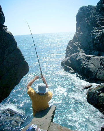 Ensenada panga fishing for white seabass stays super hot for Baja california fishing