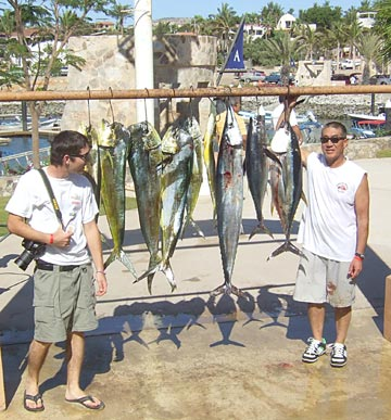 Cabo San Lucas Striped Marlin Fishing Rodeo Continues On