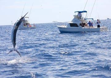 Loreto fishing boats converge on san bruno as yellowtail for Cabo san lucas fishing season