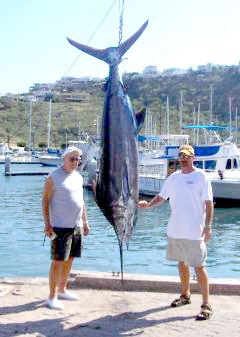 Blue marlin of 279 pounds wins san carlos mexico labor for San carlos mexico fishing
